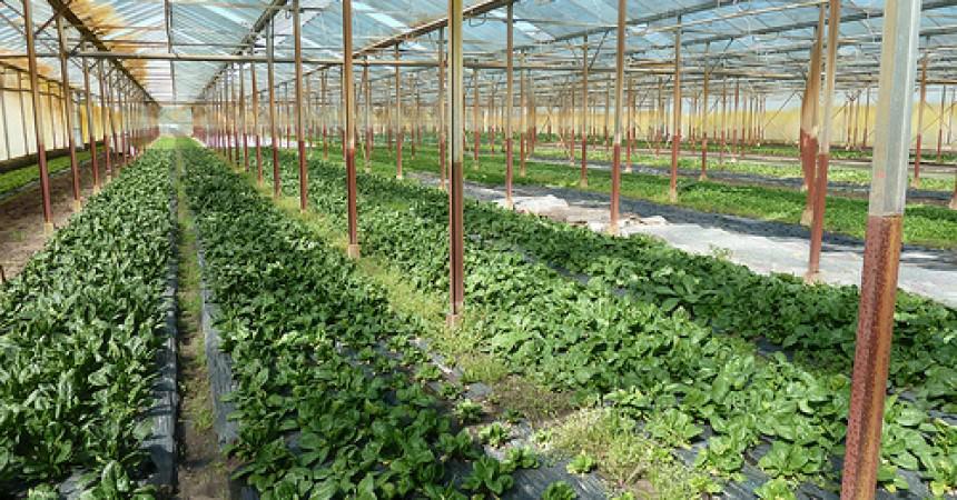 Les légumes bio d'Aurore Sournac à Eysines (33)