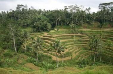 Gourmandises Balinaises et autres