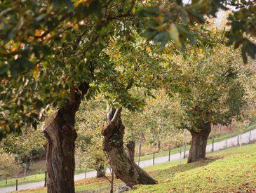 La ferme aux Châtaigniers I Lamastre I Ardèche