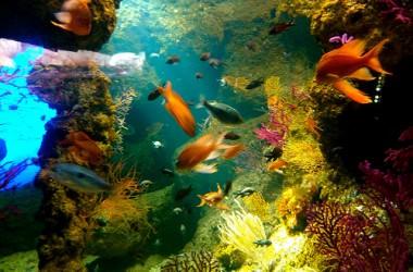 Restaurant café de l'aquarium à La Rochelle I Charente Maritime