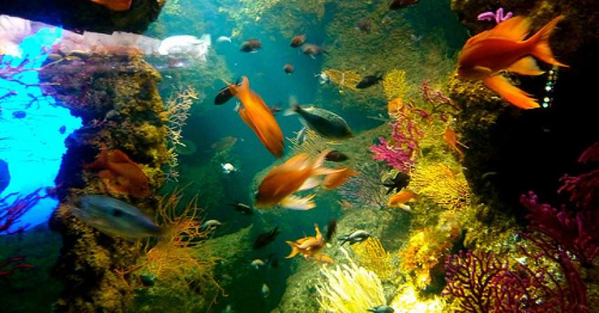restaurant de l aquarium de la rochelle ma p tite cuisine