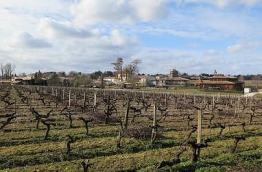 Grand'Vigne Caudalie I Gastro I Martillac (33)