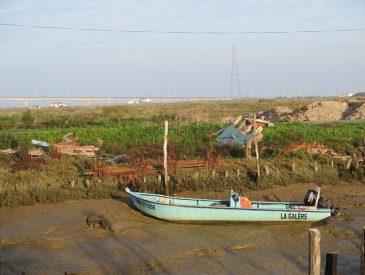 Huîtres et des crevettes impériales des marais à Marennes I Charente Maritime