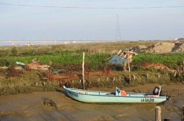 A la découverte de Marennes, des huîtres et des crevettes impériales des marais