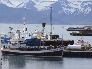 Road Trip en Islande : le Nord et les Baleines (jour 7)