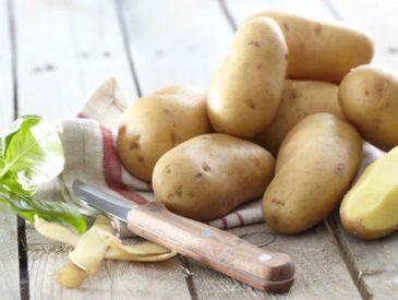 Tout savoir sur … la pomme de terre Pompadour