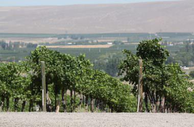 Les vins de la Vallée de Yakima [mon Wild Wild West USA]