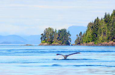 L'Ile de Vancouver & Victoria [mon Wild Wild West Canada & USA]