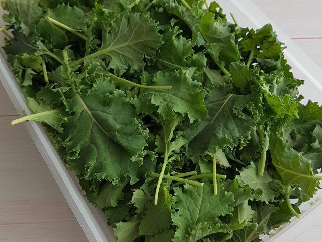 Les jeunes pousses de chou Kale