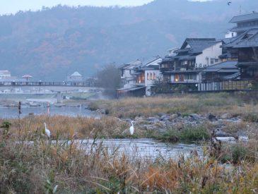 Misasa Onsen et ses sources naturelles