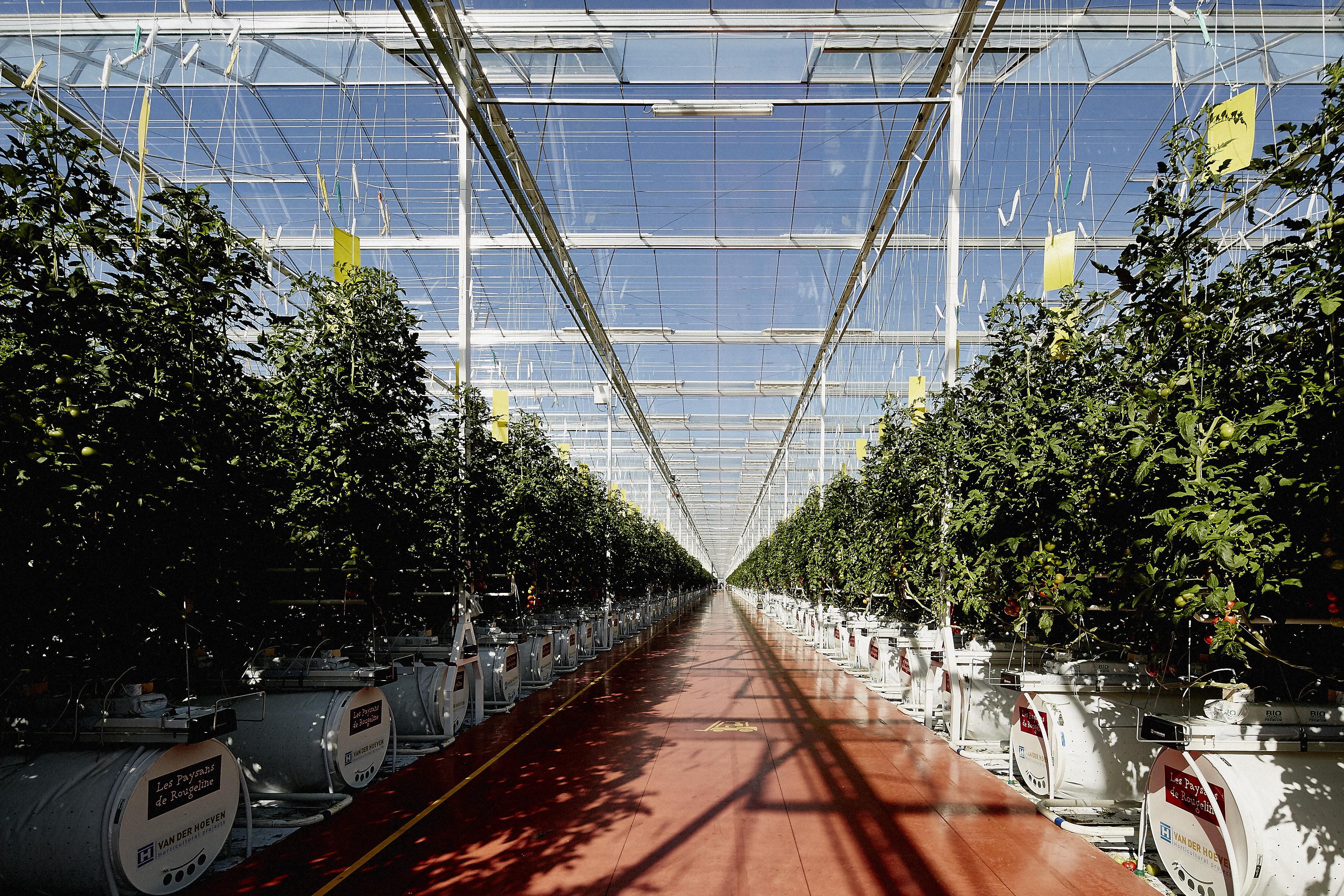 A la découverte des concombres et tomates de France
