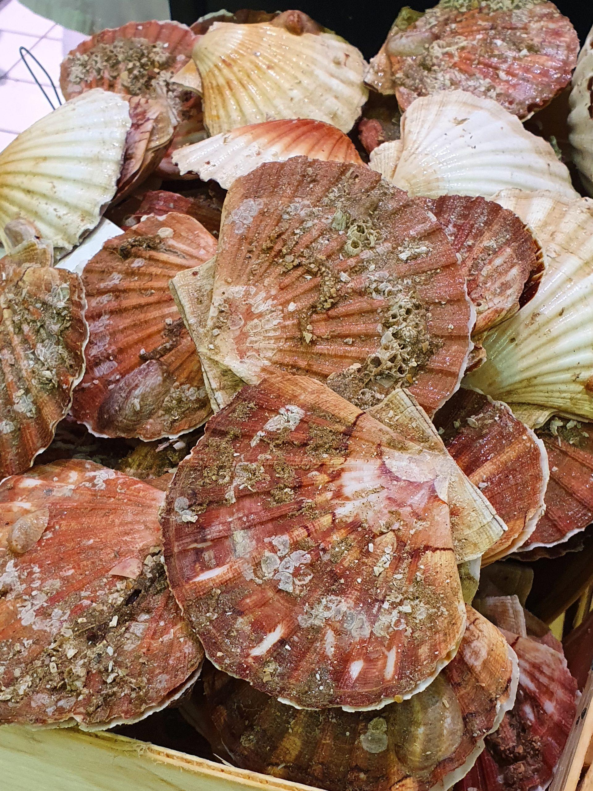 Tagliatelles aux noix de Saint Jacques, beurre d'agrumes à l'aneth